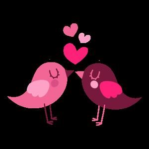 Amour Entre Oiseaux